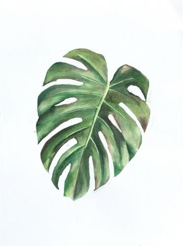 HOJA DE MONSTERA